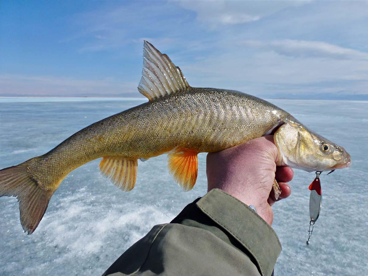 Рыбка копченая в картинках аваков предложил